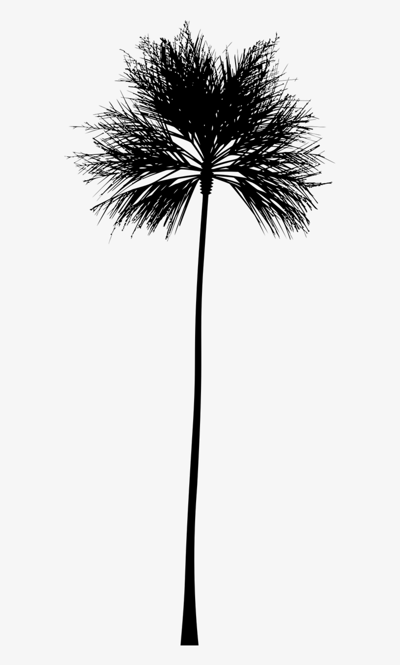 Tropical Vector Black And White - Palm Tree Silhouette Clip Art, transparent png #2568214