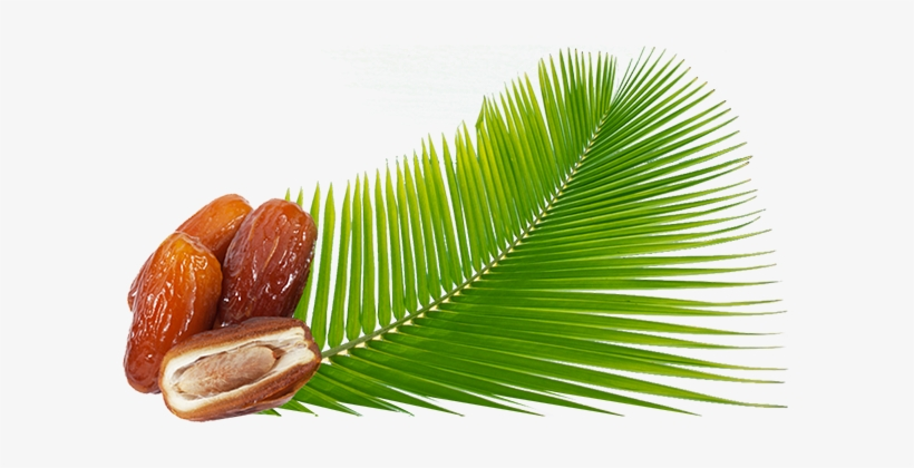 Sobopa Is A Tunisian Company Specializing In The Production, - Palm Png Dates, transparent png #2579363