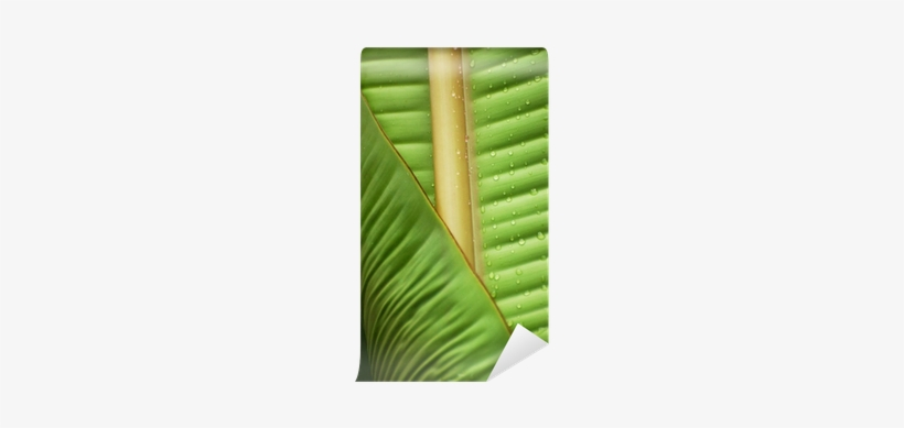 Banana Leaf Wall Mural O Pixersr We Live To Change - Wall, transparent png #2585804