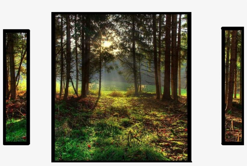 Landscapes Wild Nature Landscape Area Forest Sky Beautiful - Landscape Oil Painting Nature, transparent png #2590047