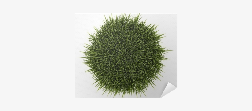 Top View Of Decorative Grass Isolated On White Background - Top View Ornamental Grass Png, transparent png #2592506