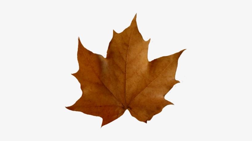 Leaf brown. Fall leaves clip art