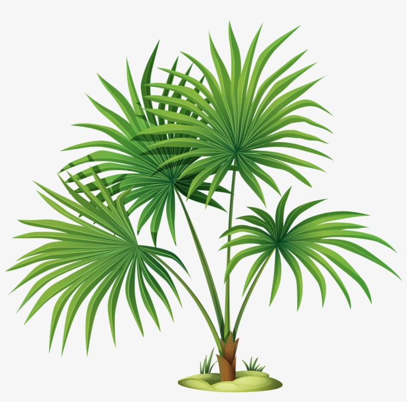 Яндекс - Фотки - Palm Tree Leaves Clipart, transparent png #2602235