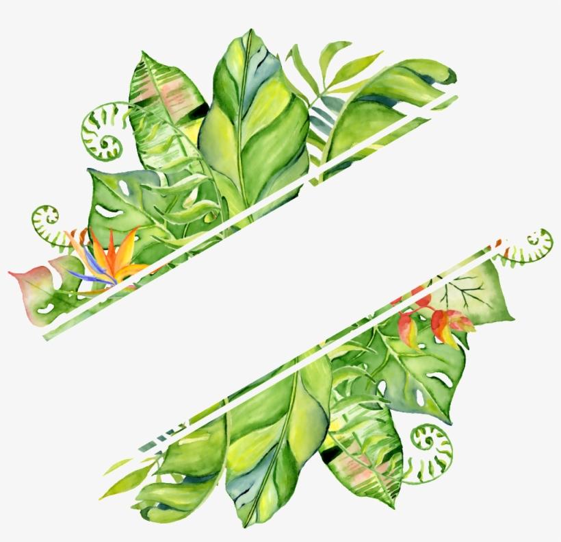 Pintado A Mano En Png Transparente Png Rendering Hojas - Hand Drawn Watercolor Tropical Frame, transparent png #2611082
