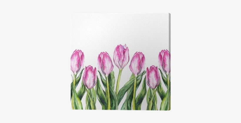Watercolor Pink Tulip Flower Nature Border Frame Canvas - Watercolor Painting, transparent png #2612385