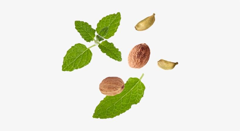 Organic Black Tea Leaves, Organic Cardamom, Organic - Chai Leaves, transparent png #2626295