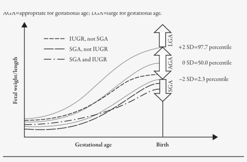 Download Prenatal Growth Chart Demonstrating Development Of Sga Vs