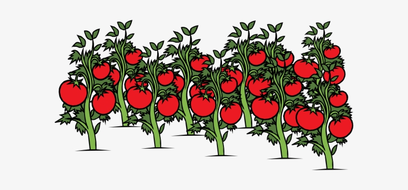 Clip Arts Related To - Tomato Plant Clipart, transparent png #271123