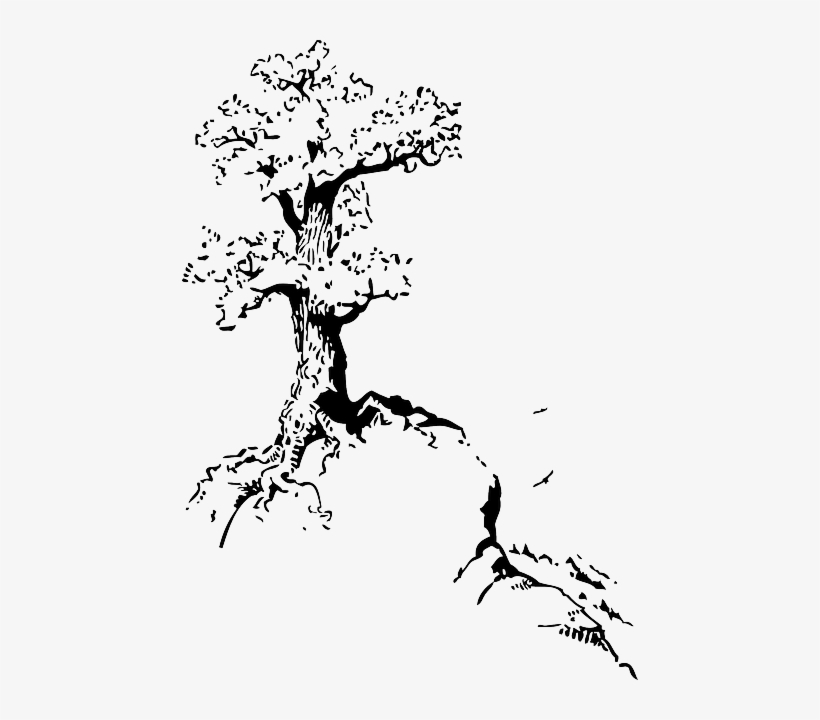Black, Top, Outline, Silhouette, Tree, Roots, White - Tree On Hill Drawing, transparent png #272133