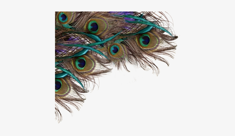 Feather Peacock Png, Peacock Feather Background Png - Happy Krishna Janmashtami Quotes, transparent png #2702375