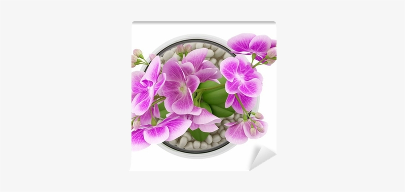 Top View Of Purple Orchid Flower In Glass Vase Isolated - Flower Top View Png, transparent png #2703485