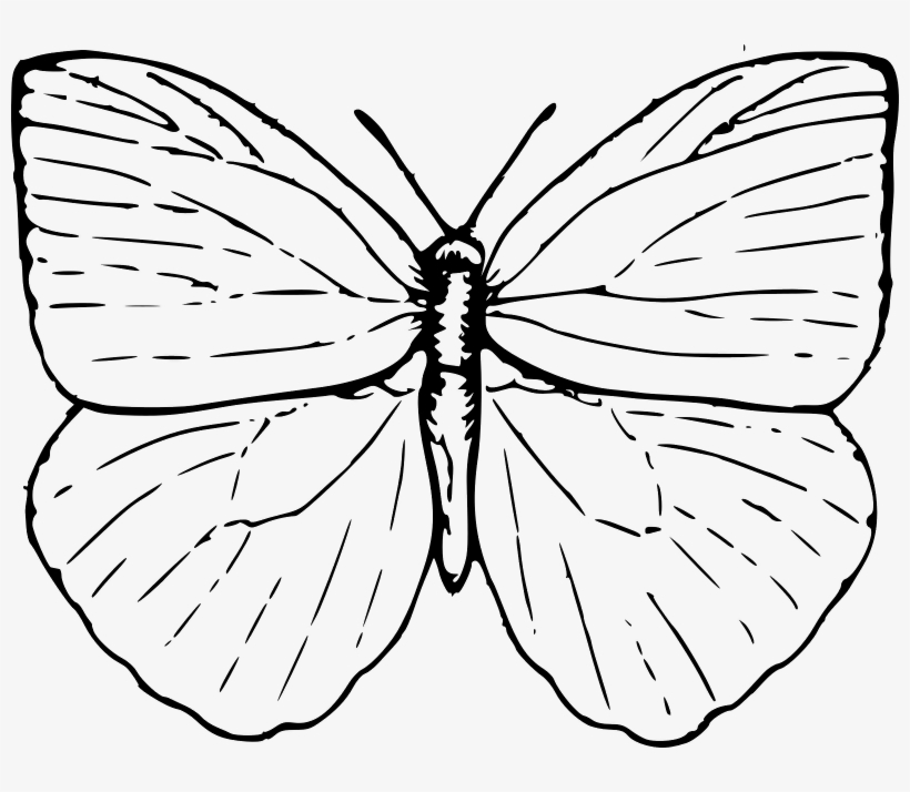 Easy Butterfly Drawings Butterfly Outline Clip Art Butterfly Clip