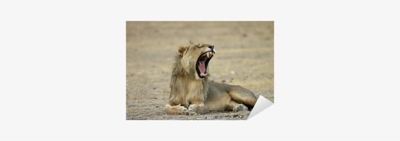Free Roaring Lion Png - Masai Lion, transparent png #2789725