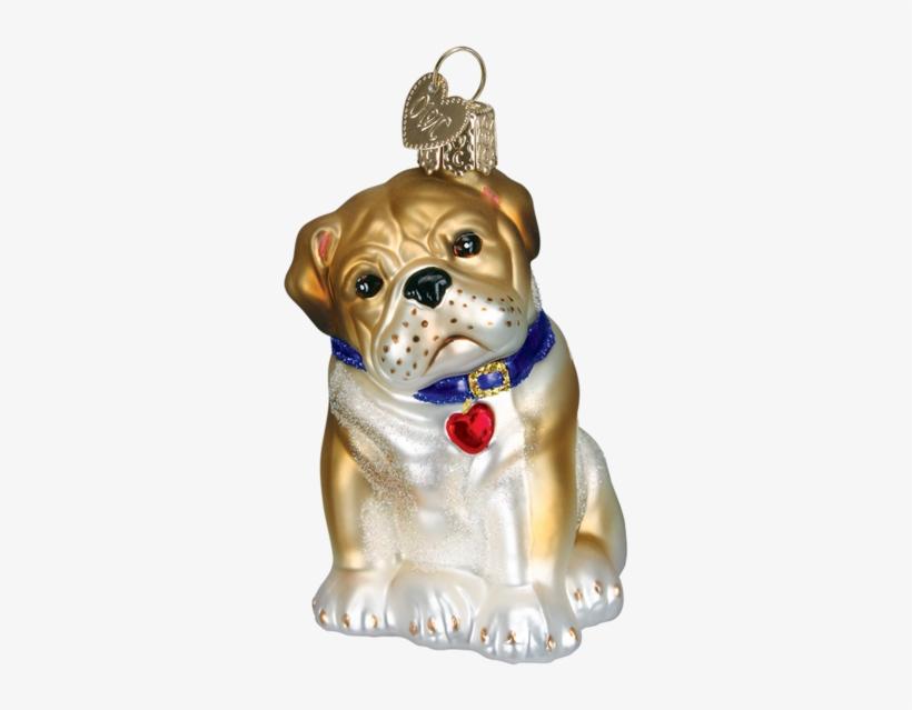 Old World Christmas English Bulldog Dog Glass Blown - Old World Christmas Bull Pup Glass Ornament, transparent png #2850552