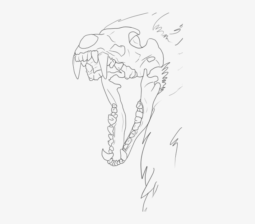 Banner Royalty Free Library Collection Of Free Ram - Wolf Skull Drawing Base, transparent png #2855064