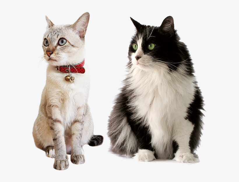 Cat Care Services In Illinois - Ração Sabor E Vida Gatos Carne E Fígado - 3kg, transparent png #2858464