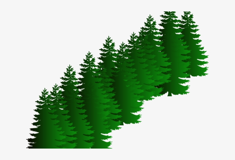 Fir Clipart Evergreen Tree - Pine Trees Black And White, transparent png #2867700