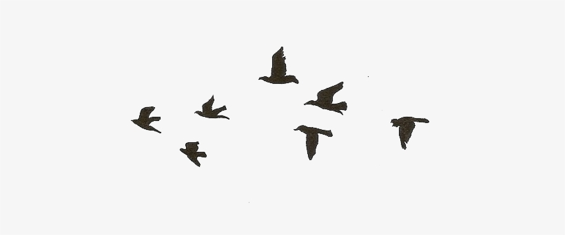 Flying Birds Gif Transparent Free Transparent Png Download Pngkey