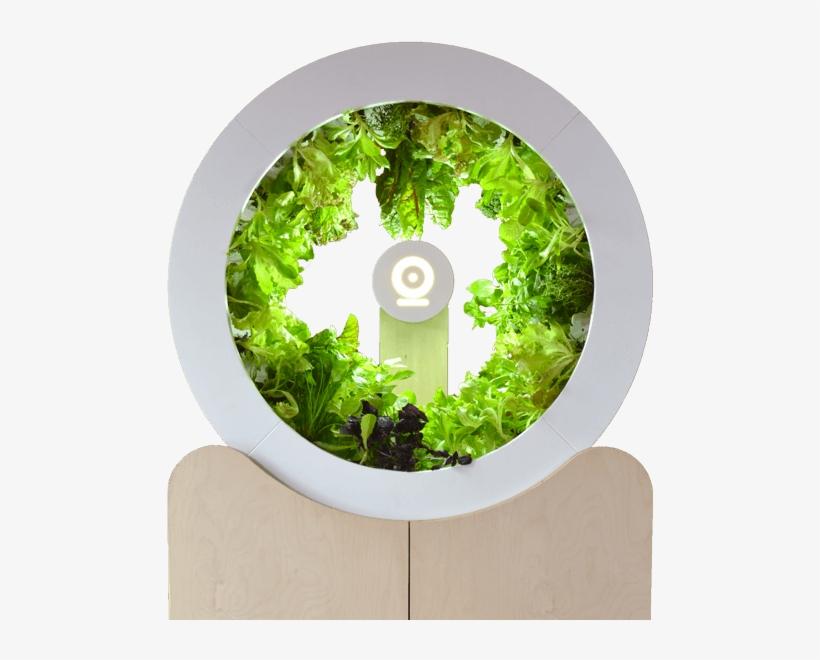 Indoor Vegetable Garden Kitchen Garden Free Transparent Png