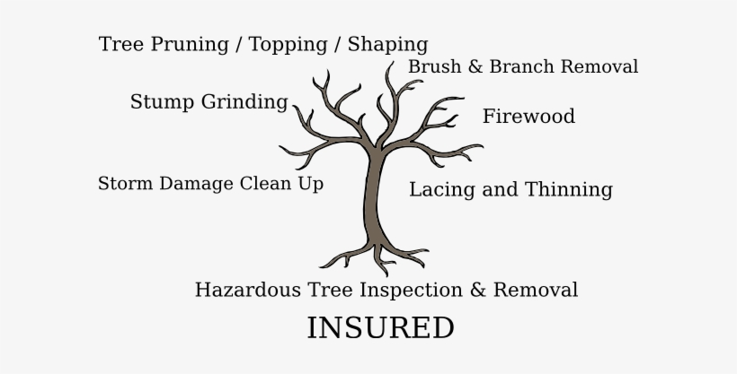 Tree Service - Tree With Roots And No Leaves, transparent png #2903744