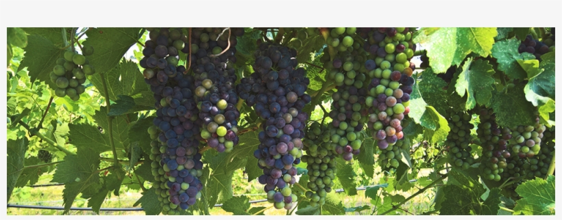 Sign Up For Our Wine Club To Receive Beautiful Washington - Wine Clubs, transparent png #2935546