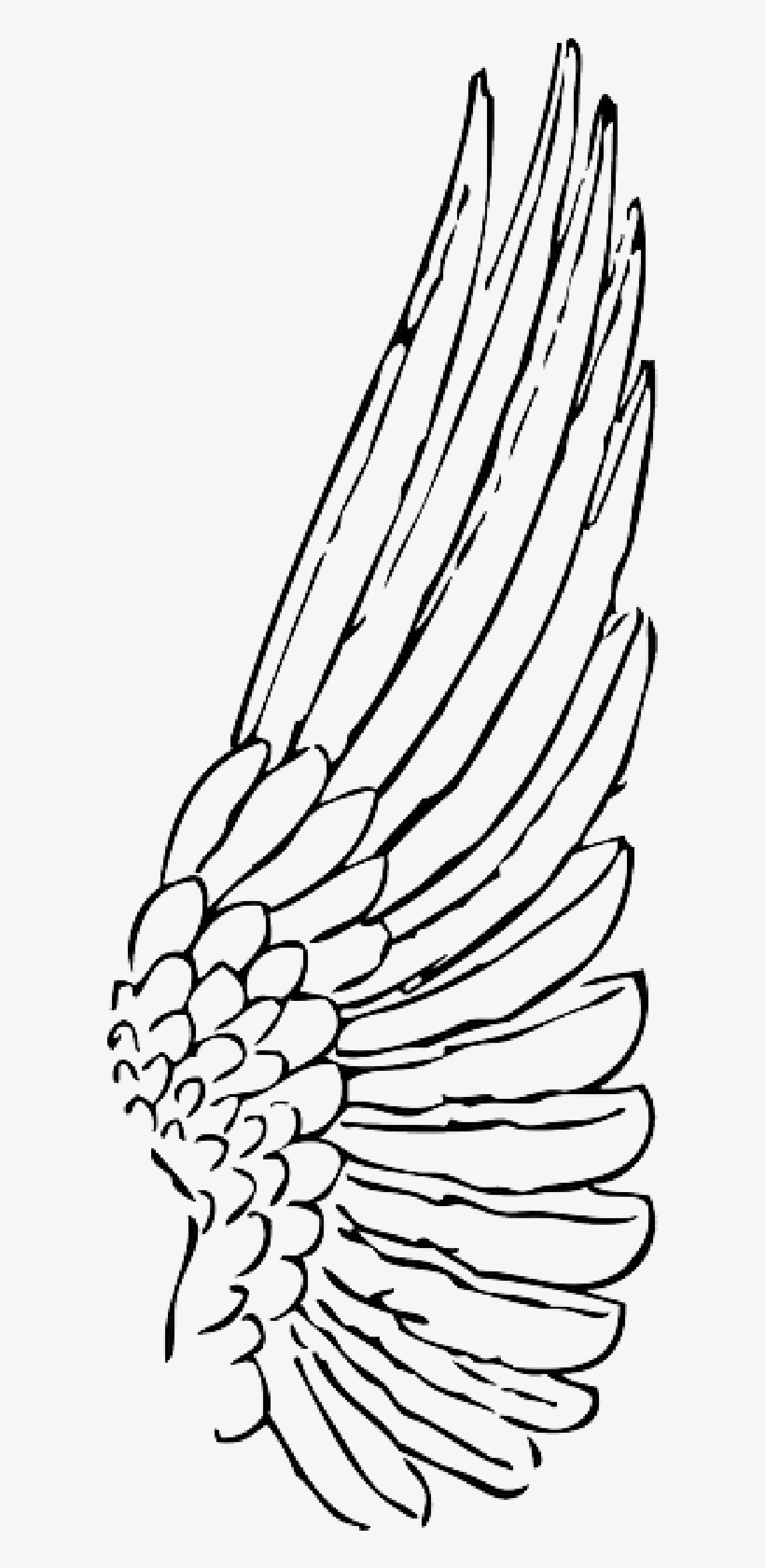 Wings bird. Clipart wing free transparent