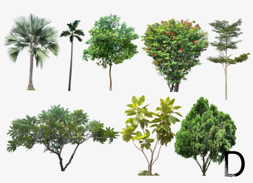 20 Tree Png Images For Architecture, Landscape, Interior - High Resolution Trees Png, transparent png #30054