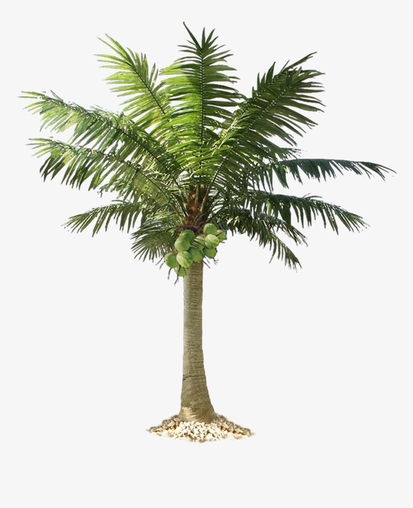 Jungle Tree Png Pic - Cut Out Palm Trees, transparent png #30132