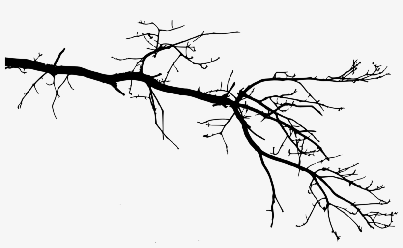 Free Download - Tree Branch Drawing Png, transparent png #31598
