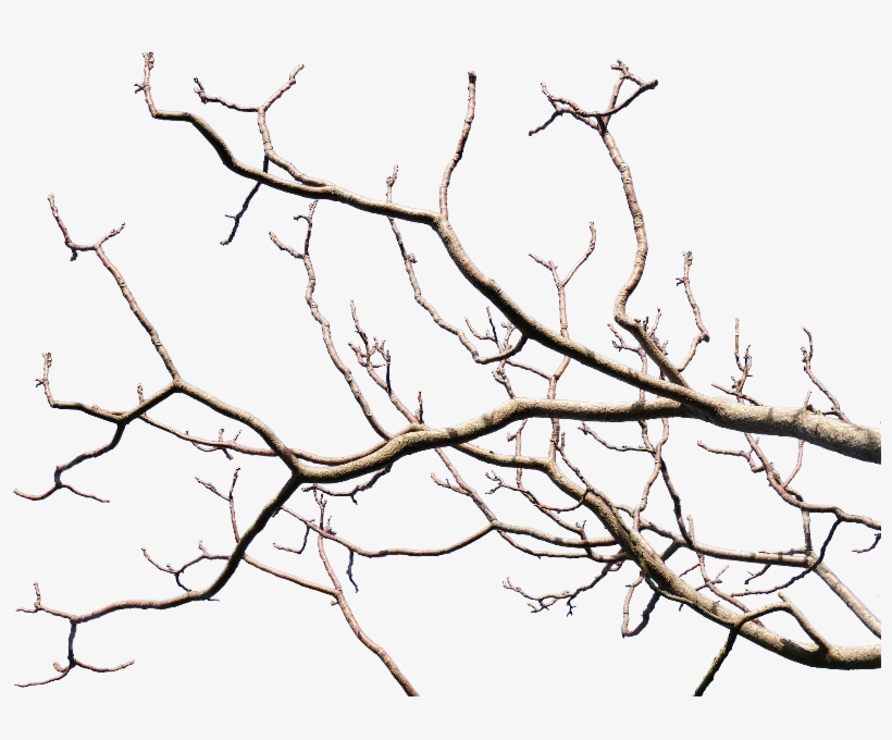Dead Tree Branch With Transparent Background Png - Tree Branch Transparent Background, transparent png #33324