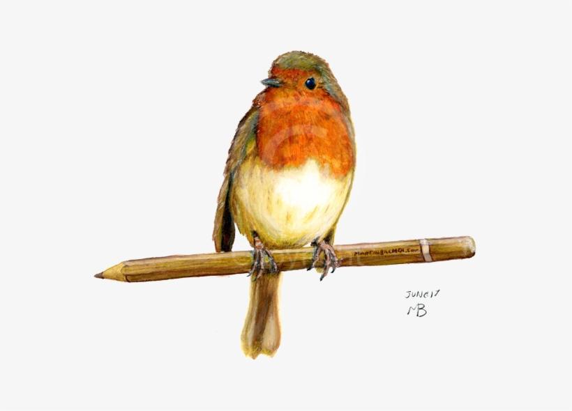 Robin Wild Bird On Pencil - Birds Garden Hand Drawn, transparent png #33494