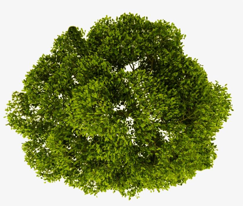 Tree Plan Png - Tree Png Plan View, transparent png #34252