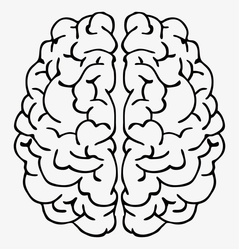 clip art black and white download brain line drawing left vs right brain png free transparent png download pngkey left vs right brain png