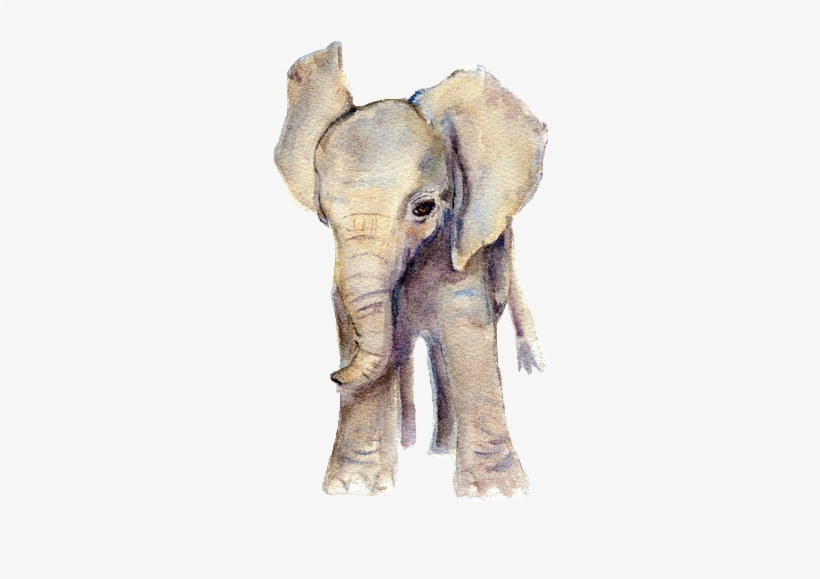 Elephant Png Hd / You can download and print the best transparent elephant hd png collection for free.