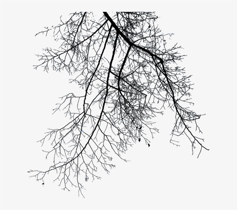 Branch Png File - Dry Tree Branches Png, transparent png #36254