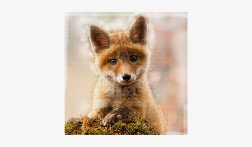 Renard Baby Fox Transparent Bg - Cute Baby Red Fox, transparent png #3042358