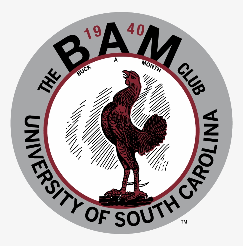 The Hand Drawn Gamecocks Are Usually From Programs - South Carolina Gamecocks, transparent png #3072065