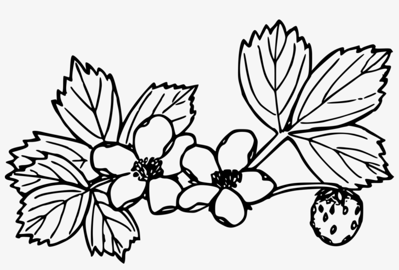 Image Freeuse Strawberry Coloring Book Plants - Drawings Of Strawberry  Plants - Free Transparent PNG Download - PNGkey