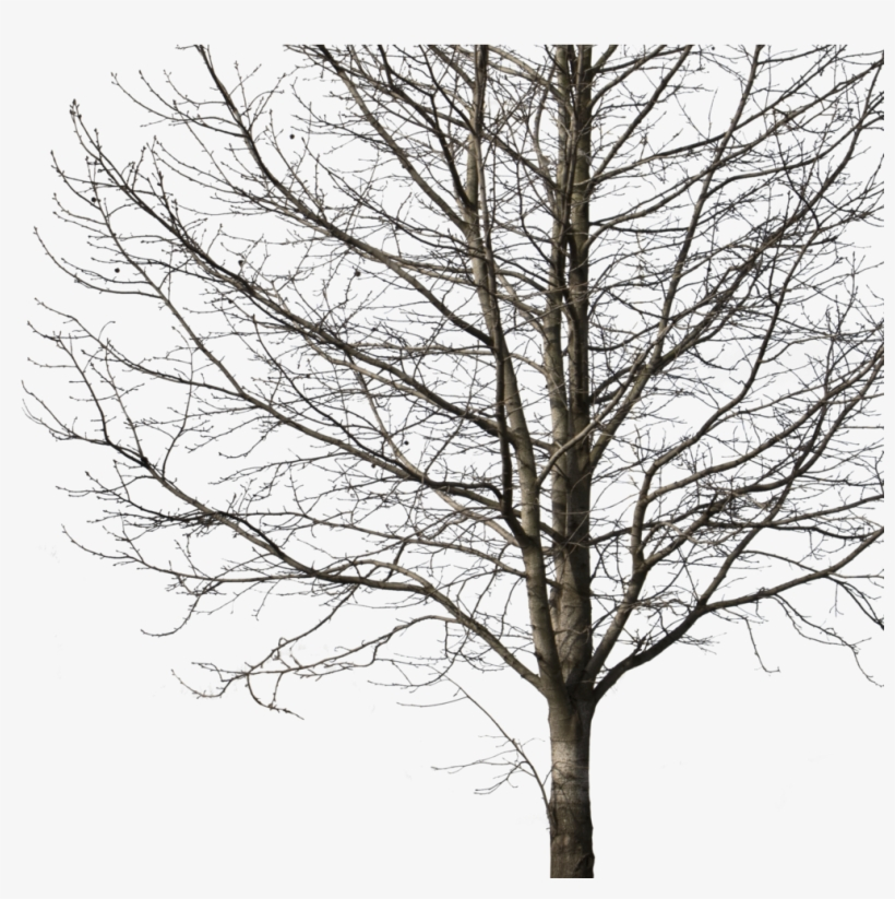 Deciduous Tree Winter I Cutout Trees Png Deciduous - Cut Out Tree Png, transparent png #3142831