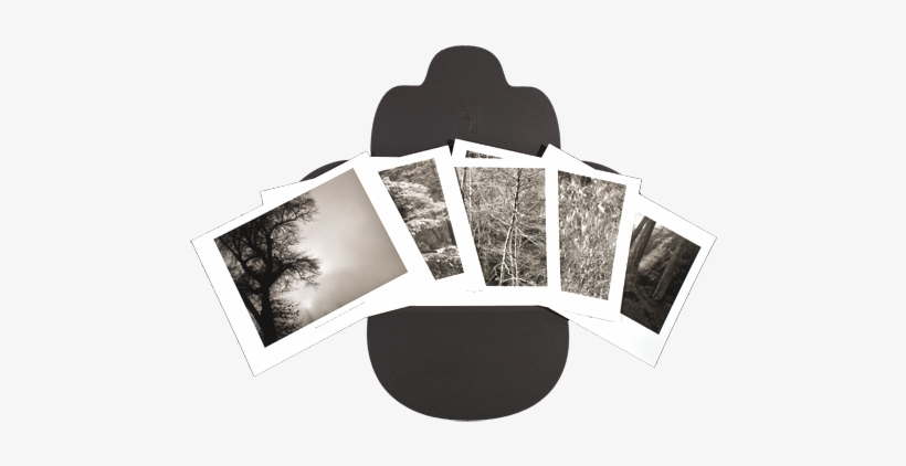 Winter Trees, transparent png #3143053