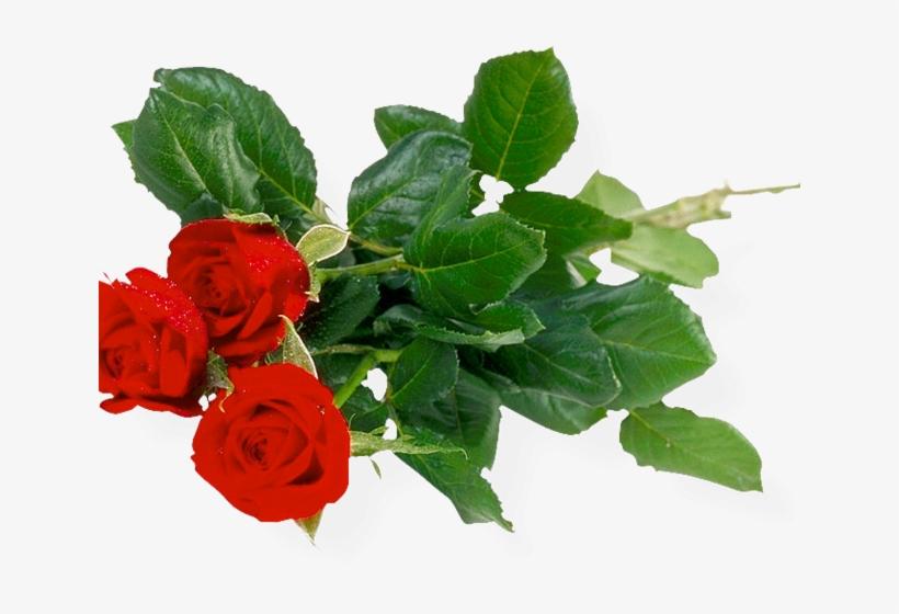 Rose Bush Clipart Anime Rose - Good Morning Pic Beautiful Roses, transparent png #3183599