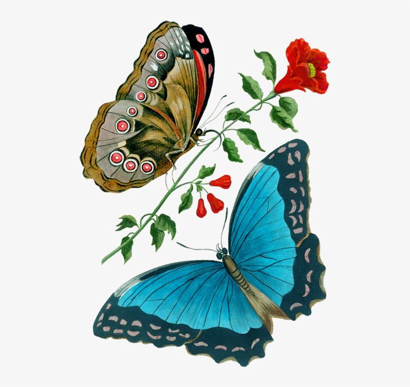 Leinwandbild Canvas Print Wandbild Schmetterling auf Kaktus Nr 1292