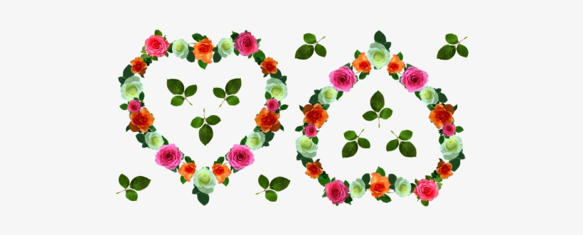Rose Day - Evergreen Rose, transparent png #3186871