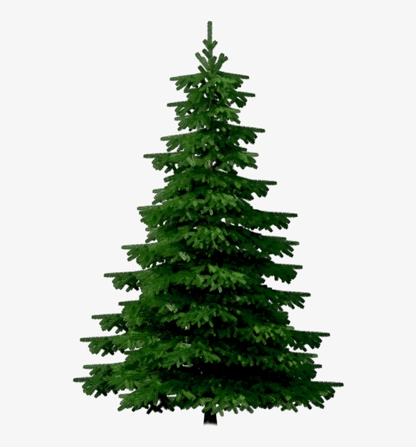 Crop Tree Png - Merry Christmas Christmas Festival, transparent png #3190586
