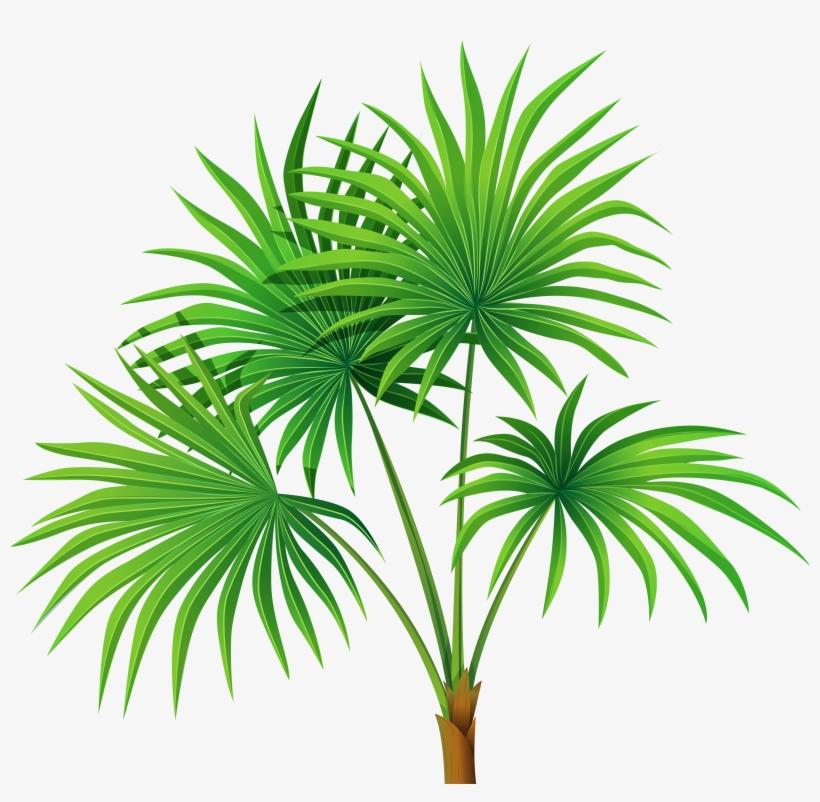 Palm Tree Leaves Clipart, transparent png #3253690