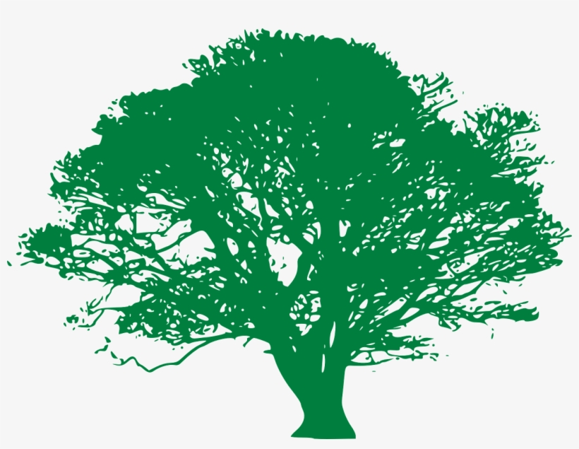 Tree-307149 - Oak Tree With Transparent Background, transparent png #3261519