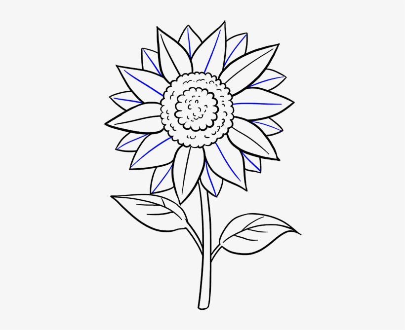Drawn Sunflower Easy - Sunflower Drawing Step By Step Easy, transparent png #3280996