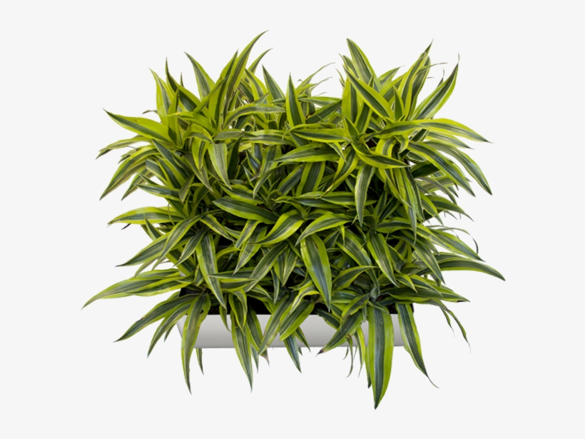 """This Beautifully Modern Planter Tray Comes In Multiple - 14"""" Living Wall Planter, transparent png #335793"""