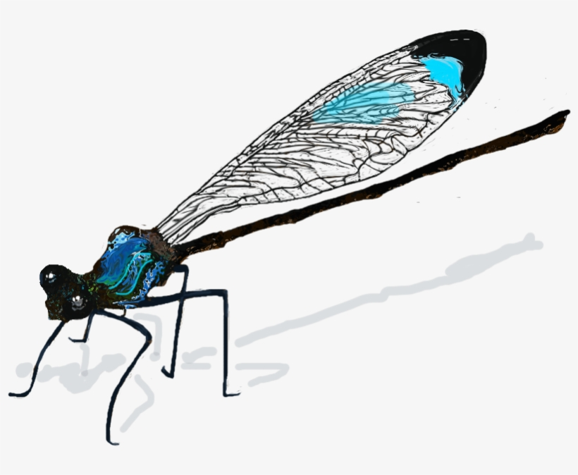 Dragonfly Wings Png Download Damselfly Drawing Free