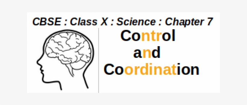 Class X - Your Brain And You: What Neuroscience Means, transparent png #3317195